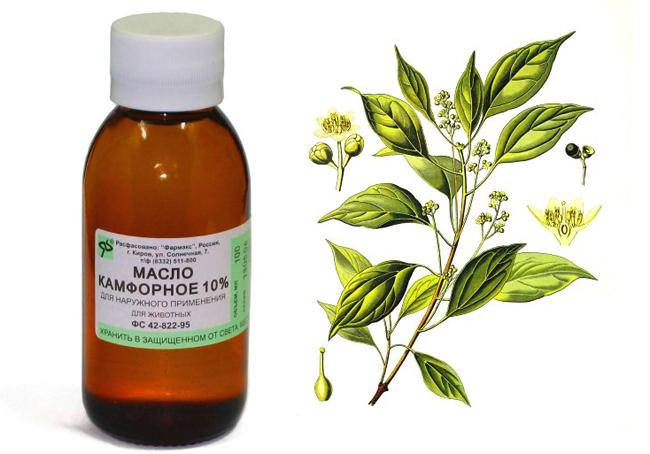 Какие масла используют для лечения геморроя