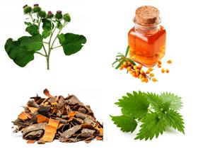 Эффективные травы от геморроя: описание и особенности применения