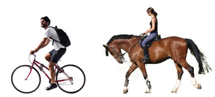 Велосипед и конный спорт