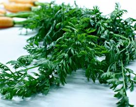 Морковная ботва при геморрое: лечебные свойства, рецепты, отзывы