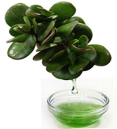 Сок растения